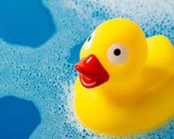 Kreislauf des Wassers - Ente badet im Wasser